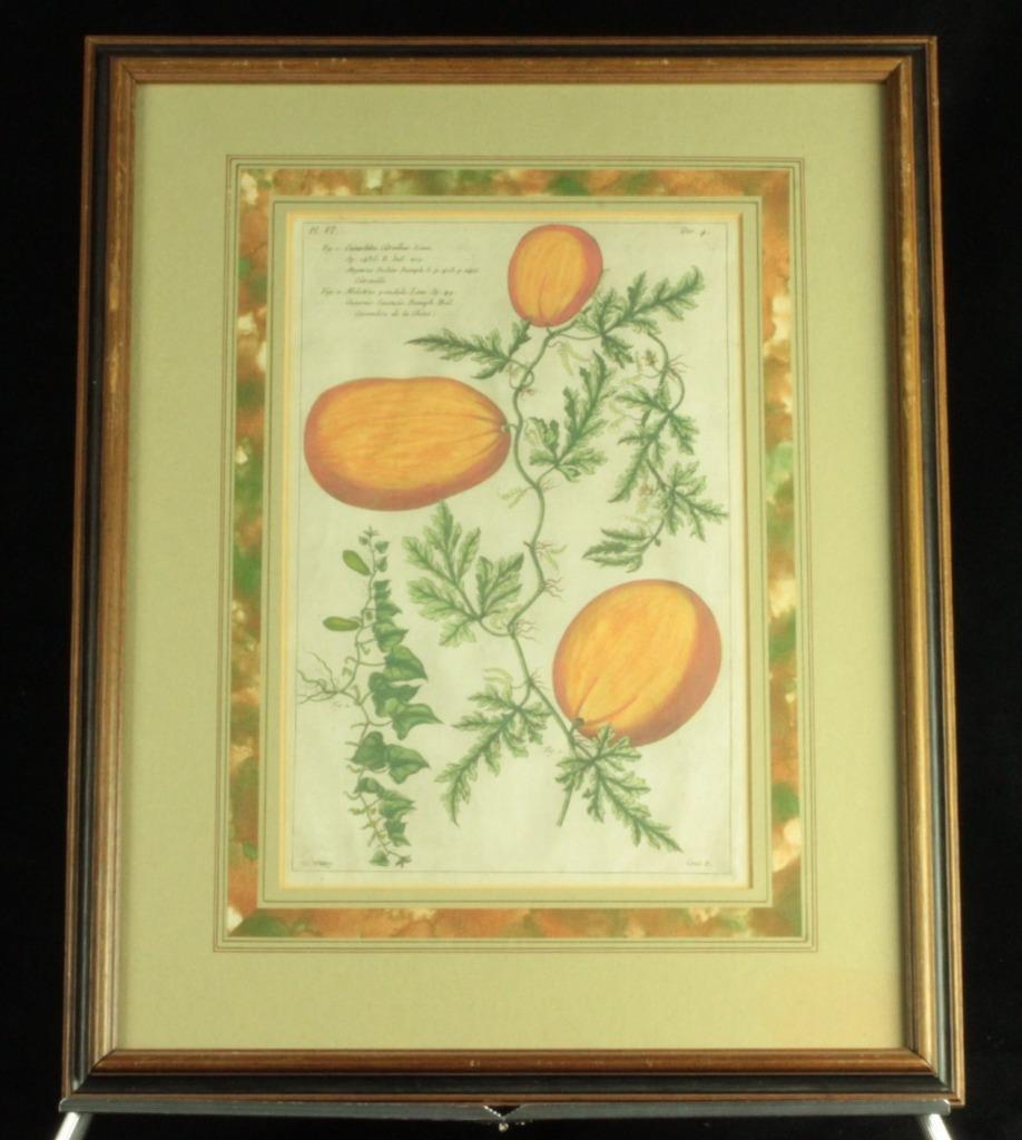 c1890 Framed Chromolith Litho Print Watermelon/Fruit/Botanical Specimen